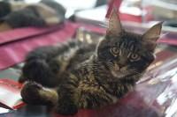 Выставка кошек в ГКЗ. 26 марта 2016 года, Фото: 72
