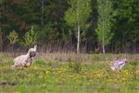 В Туле состоялись собачьи бега, Фото: 11
