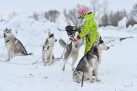 Праздник северных собак на Куликовом поле , Фото: 44