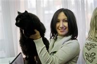 В Туле прошла международная выставка кошек «Зимнее конфетти», Фото: 4