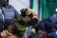 Выставка собак в Туле, Фото: 48
