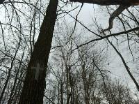 В Тульском лесу нашли загадочную поляну с крестами, елкой и зеркалами, Фото: 12