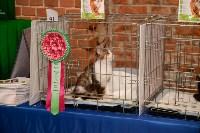 Выставка кошек в Искре, Фото: 47