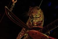 Цирк «Вива, Зорро!» в Туле , Фото: 15