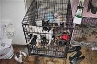 Похищенные собаки, Фото: 25