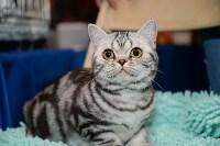 Выставка кошек в Искре, Фото: 88