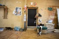 Волонтеры спасли кошек из адской квартиры, Фото: 11