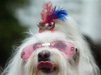 Собачий карнавал, Фото: 14