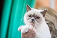 В Туле прошла выставка «Пряничные кошки» , Фото: 112