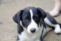 Собаки на тульской метеостанции, Фото: 2
