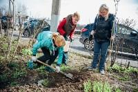 Посадка деревьев во дворе на ул. Максимовского, 23, Фото: 8
