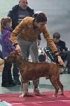 Выставка собак в Туле 26.01, Фото: 45