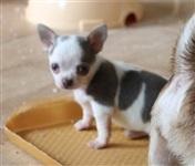 Похищенные собаки, Фото: 34