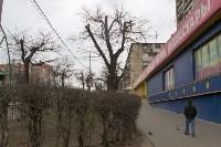 Кронированные деревья на ул.Октябрьской. 7.04.2015, Фото: 6