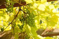 Сергей Белов: Я угощаю телекомпанию домашним вином, Фото: 5