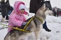Праздник северных собак на Куликовом поле , Фото: 2