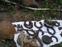 В Тульской области в лесу поисковики нашли захоронение артиллеристов и лошадей, Фото: 6