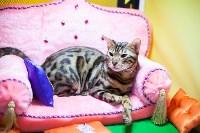 В Туле прошла выставка «Пряничные кошки» , Фото: 88