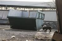 На тульские мусорки установили видеокамеры , Фото: 4