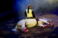 Цирк «Вива, Зорро!» в Туле , Фото: 64