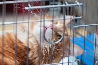 Выставка кошек в МАКСИ, Фото: 20