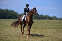 В Ясной поляне стартовал турнир по конному спорту, Фото: 84