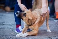 Дворняги, дворяне, двор-терьеры: 50 фото самых потрясающих уличных собак, Фото: 12