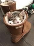 Спящие коты, Фото: 8
