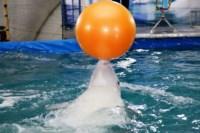 Дельфинарий в Туле, Фото: 5