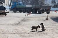 Как в Туле дезинфицируют маршрутки и автобусы, Фото: 22