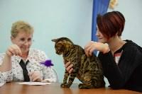 Выставка кошек в Туле, Фото: 43