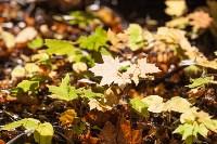 Золотая осень в Тульской области, Фото: 80