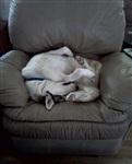 Кошки и собаки, проигравшие битву с мебелью, Фото: 23