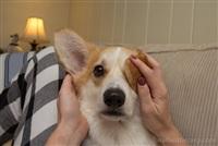 Собака-актриса, Фото: 6