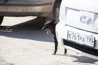 Дворняги, дворяне, двор-терьеры: 50 фото самых потрясающих уличных собак, Фото: 9