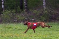 В Туле состоялись собачьи бега, Фото: 20