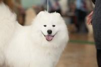 Выставка собак в Туле, 29.11.2015, Фото: 37