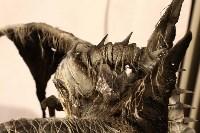 Фантастическая верфь Анатолия Печникова, Фото: 7