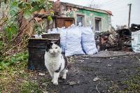 Тульские котики, Фото: 41