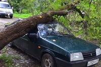 На автомобиль упало дерево, Фото: 6