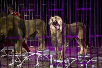 Шоу фонтанов «13 месяцев» в Тульском цирке – подарите себе и близким путевку в сказку!, Фото: 72