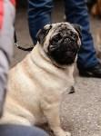 """Выставки собак в ДК """"Косогорец"""", Фото: 63"""