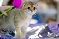Выставка кошек. 4 и 5 апреля 2015 года в ГКЗ., Фото: 54