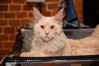 Выставка кошек в Искре, Фото: 80