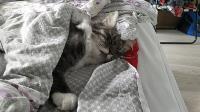 Тульские коты, которых достали хозяева на самоизоляции, Фото: 24