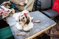 Выставка собак в Туле, 29.11.2015, Фото: 56