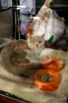 Пряничные кошки, Фото: 51