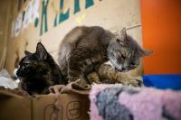 Волонтеры спасли кошек из адской квартиры, Фото: 34