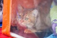 Выставка кошек в МАКСИ, Фото: 64