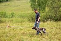 Выставка охотничьих собак под Тулой, Фото: 57